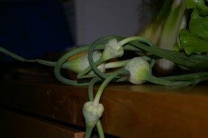 Garlic scapes - detail